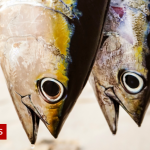 Credit Suisse fined over Mozambique tuna scandal