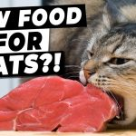 Raw Food Diets For Cats – Are They WORTH It? | Ultimate Pet Nutrition
